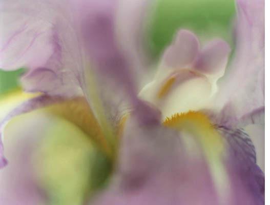 абстракция цветы фото