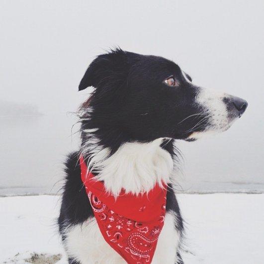 Найдите собаку Момо - №22