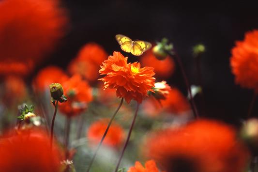 Фото насекомых