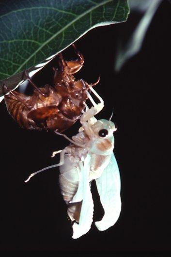 фото жуков насекомых