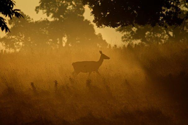 Фотограф дикой природы Саймон Рой/Simon Roy - №7