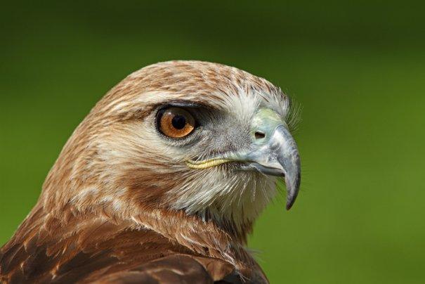 Фотограф дикой природы Саймон Рой/Simon Roy - №9