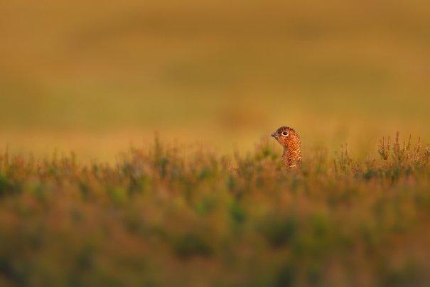 Фотограф дикой природы Саймон Рой/Simon Roy - №10