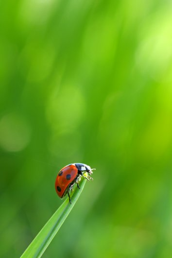 Фотограф дикой природы Саймон Рой/Simon Roy - №12
