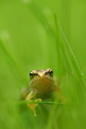 Фотограф дикой природы Саймон Рой/Simon Roy - №15