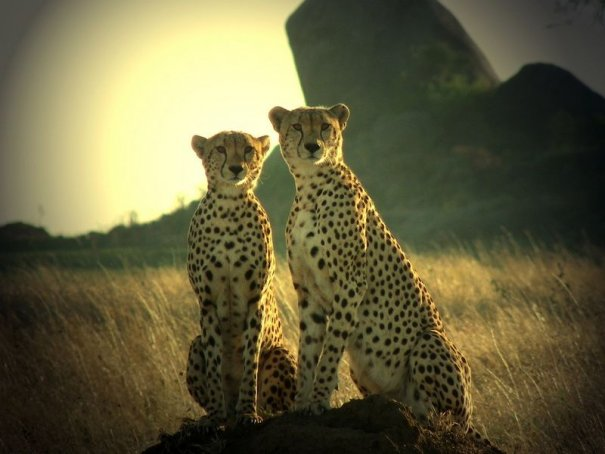 Достопримечательности Танзании - №2