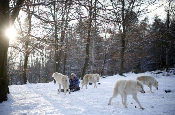 Мужчина - волк - №5