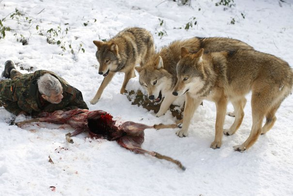 Мужчина - волк - №14