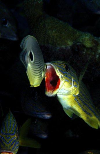 фото рыб под водой