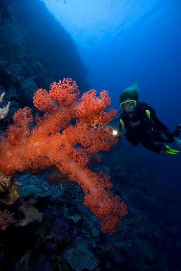красивые фото под водой
