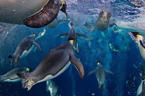 Paul Nicklen/Canada/National Geographic Magazine