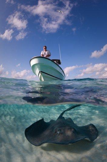 Фото конкурс - фестиваль «Золотой Дельфин» - №9