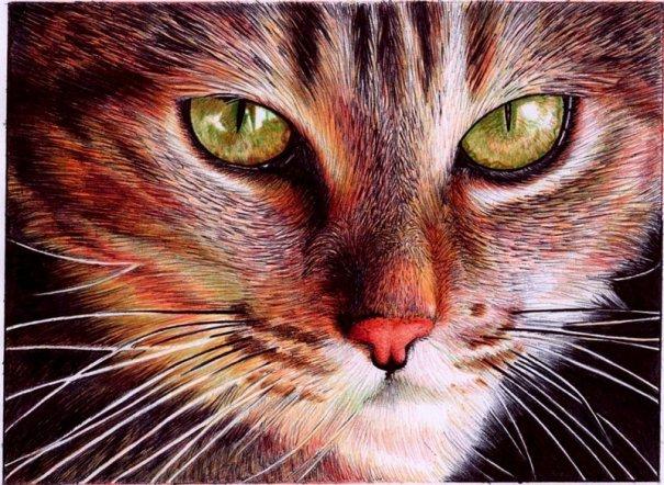 Портрет кошки