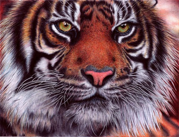 Портрет тигра