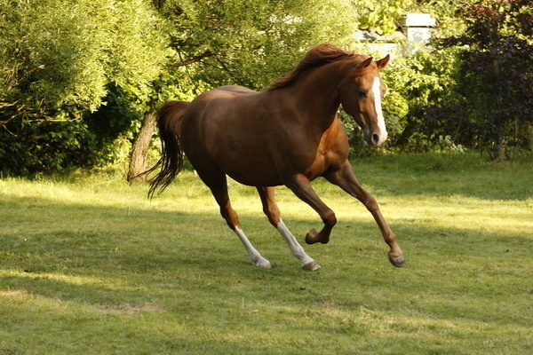 Красивые фото лошадей - мастер Лидия Невзорова - №1