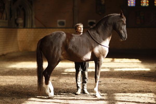 Красивые фото лошадей - мастер Лидия Невзорова - №3