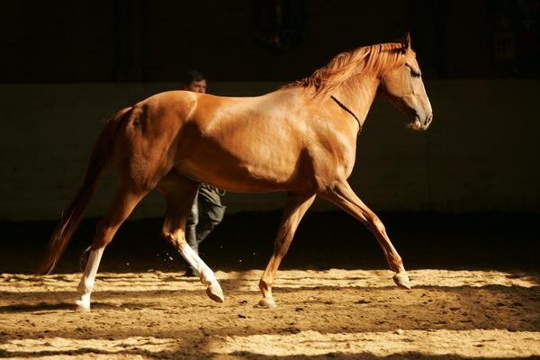 Красивые фото лошадей - мастер Лидия Невзорова - №4