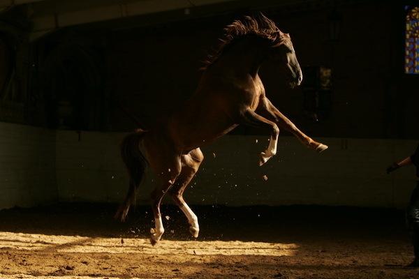Красивые фото лошадей - мастер Лидия Невзорова - №5