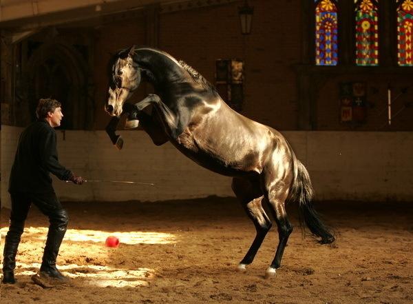 Красивые фото лошадей - мастер Лидия Невзорова - №6