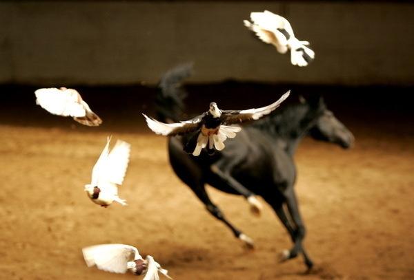 Красивые фото лошадей - мастер Лидия Невзорова - №7