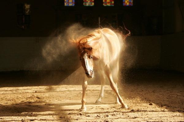 Красивые фото лошадей - мастер Лидия Невзорова - №8