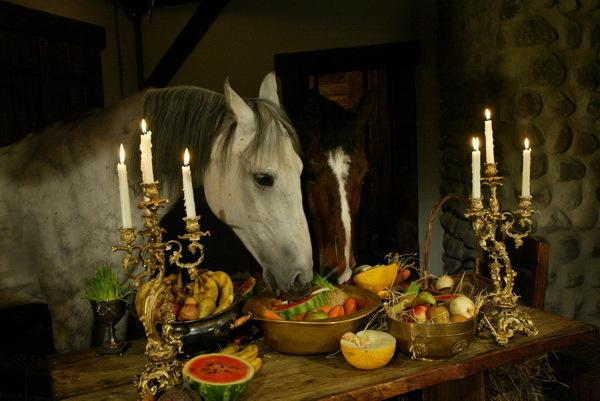 Красивые фото лошадей - мастер Лидия Невзорова - №11