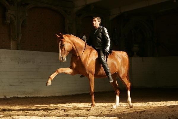 фото лошадей