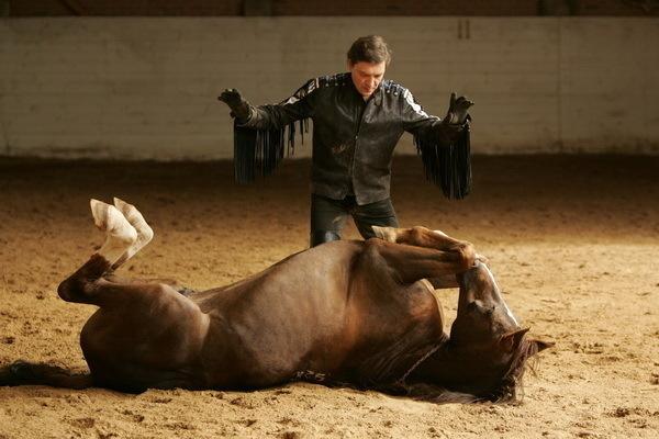 красивые фото лошадей