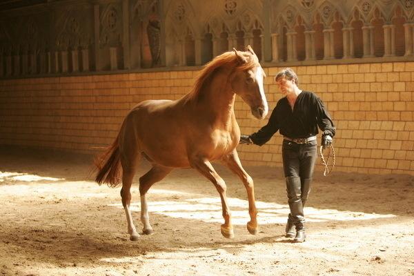 фото самых красивых лошадей