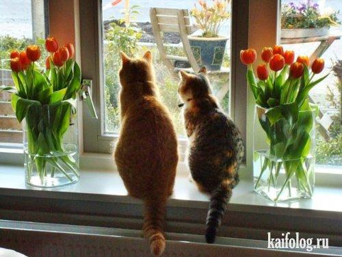 Фото юмор - про 8 марта! - №9