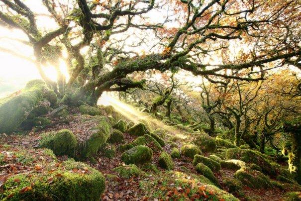 Леса Вистмен, Англия.