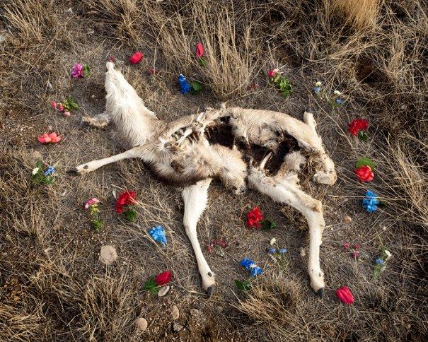 Фото эксперимент. Животные после смерти - №1