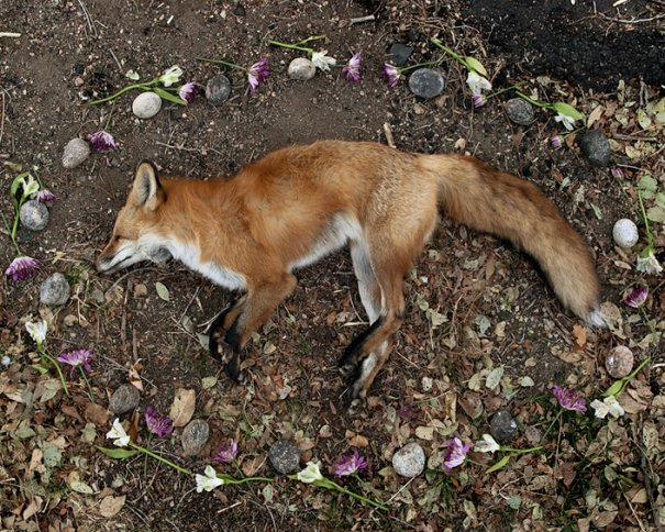 Фото эксперимент. Животные после смерти - №2