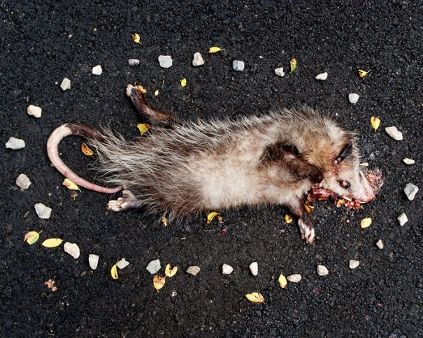Фото эксперимент. Животные после смерти - №3