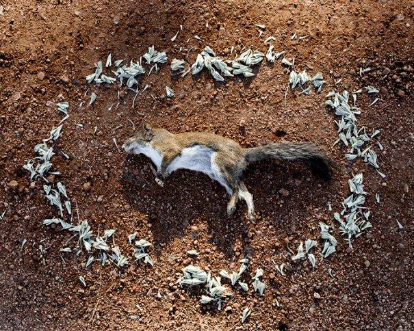 Фото эксперимент. Животные после смерти - №4