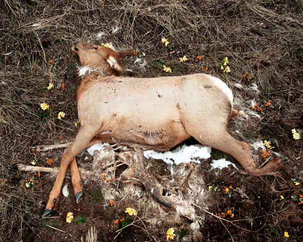 Фото эксперимент. Животные после смерти - №5