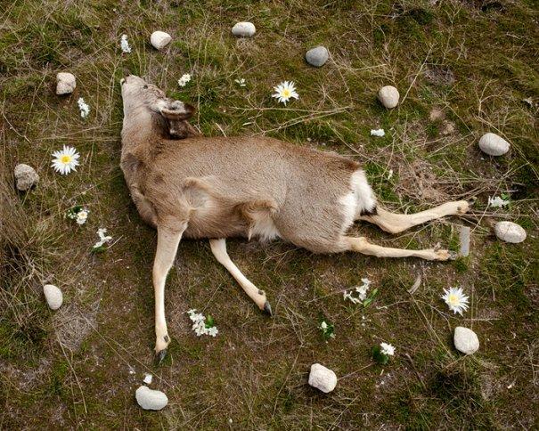 животные после смерти