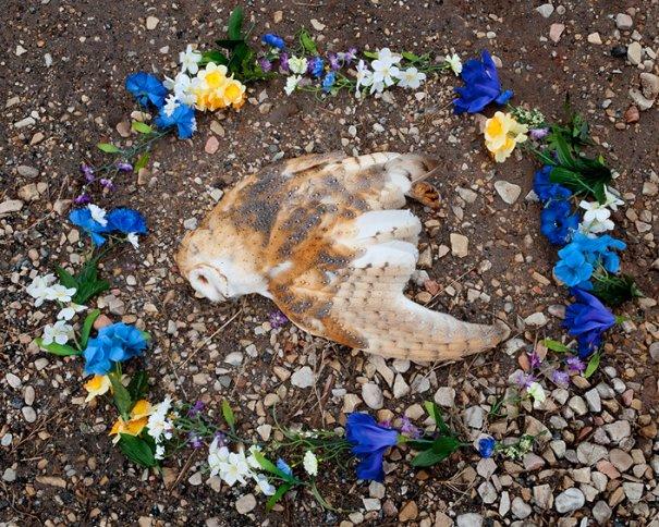 куда попадают животные после смерти
