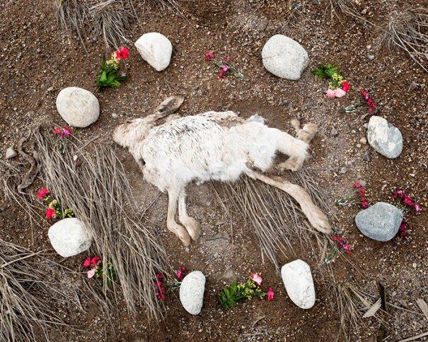 жизнь после смерти у животных