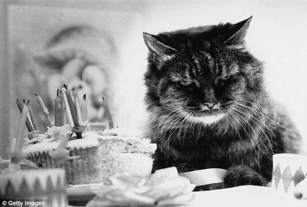 """""""Ретро"""" фото котов. Как это делали раньше - №1"""