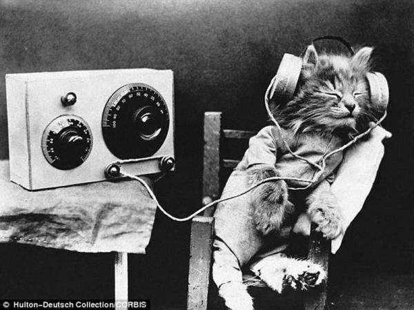 """""""Ретро"""" фото котов. Как это делали раньше - №2"""