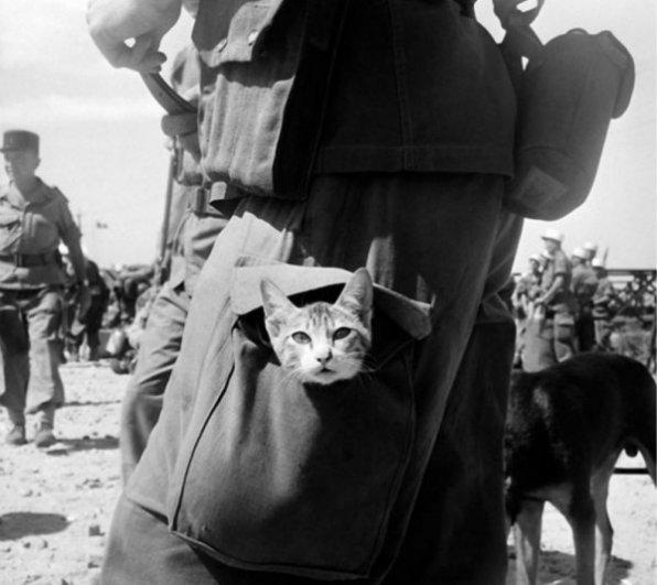 """""""Ретро"""" фото котов. Как это делали раньше - №8"""