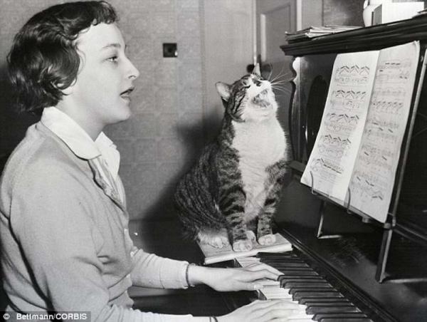 """""""Ретро"""" фото котов. Как это делали раньше - №10"""