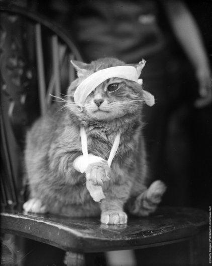 """""""Ретро"""" фото котов. Как это делали раньше - №11"""