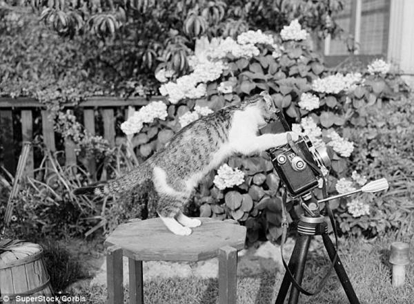 фото больших котов