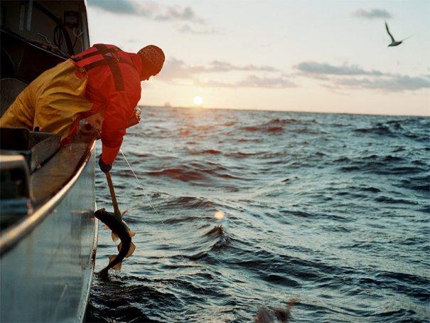 Морские приключения фотографа Кори Арнольда - №5