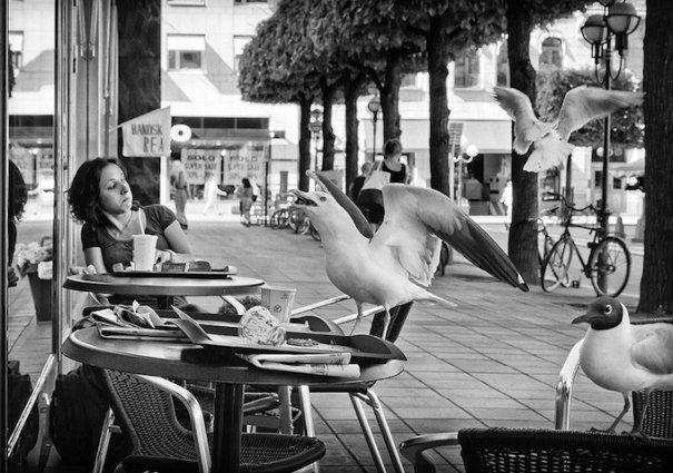 Шведский фотограф Нильс-Эрик Ларсон/Nils-Erik Larson - №12