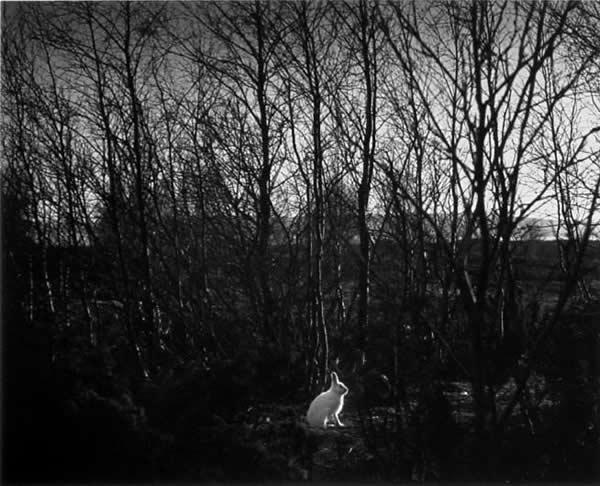 Фотограф Pentti Sammallahti - №14