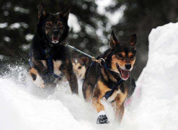 Bill Roth/The Anchorage Daily News via Associated Pres