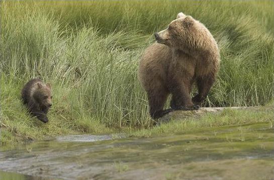 Фотограф Роб Райнен. Защита природы стоит того, посмотрите - №3